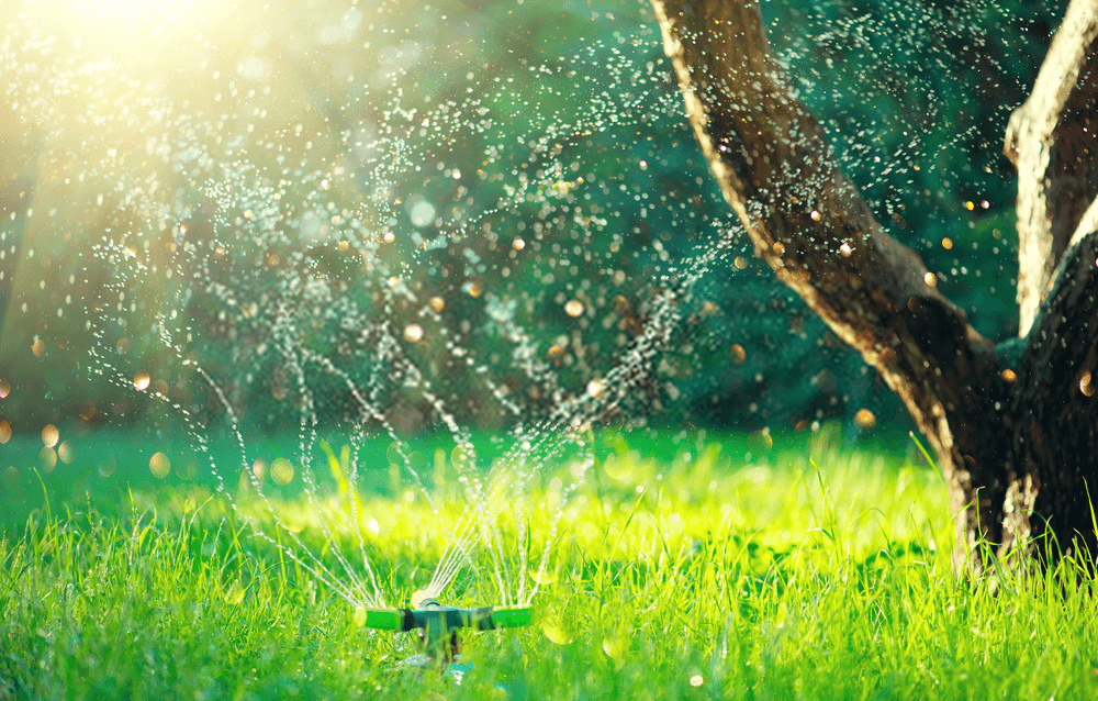 smart-garden-activated-with-full-automatic-sprinkler-irrigation-system-working